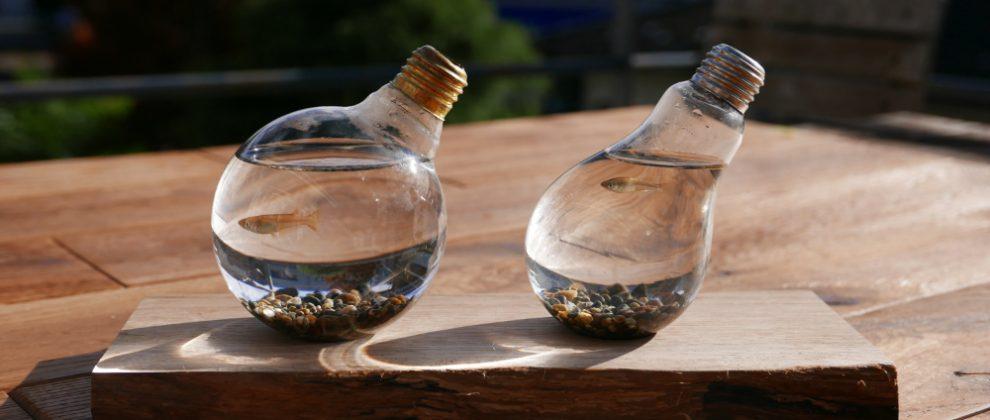 切れた電球の再利用オブジェ・メダカの水槽ディスプレイ